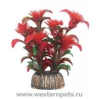 """Растение """"Тритон"""" 10 см. /1071/"""