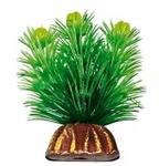 """Растение """"Тритон"""" 8 см. /0890/"""