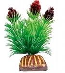 """Растение """"Тритон"""" 8 см. /0891/"""