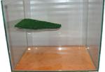 Черепашник стеклянный с островом