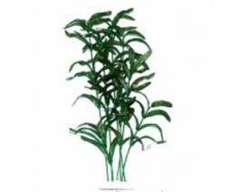 """Растение """"Тритон"""" 25 см. /8193/"""
